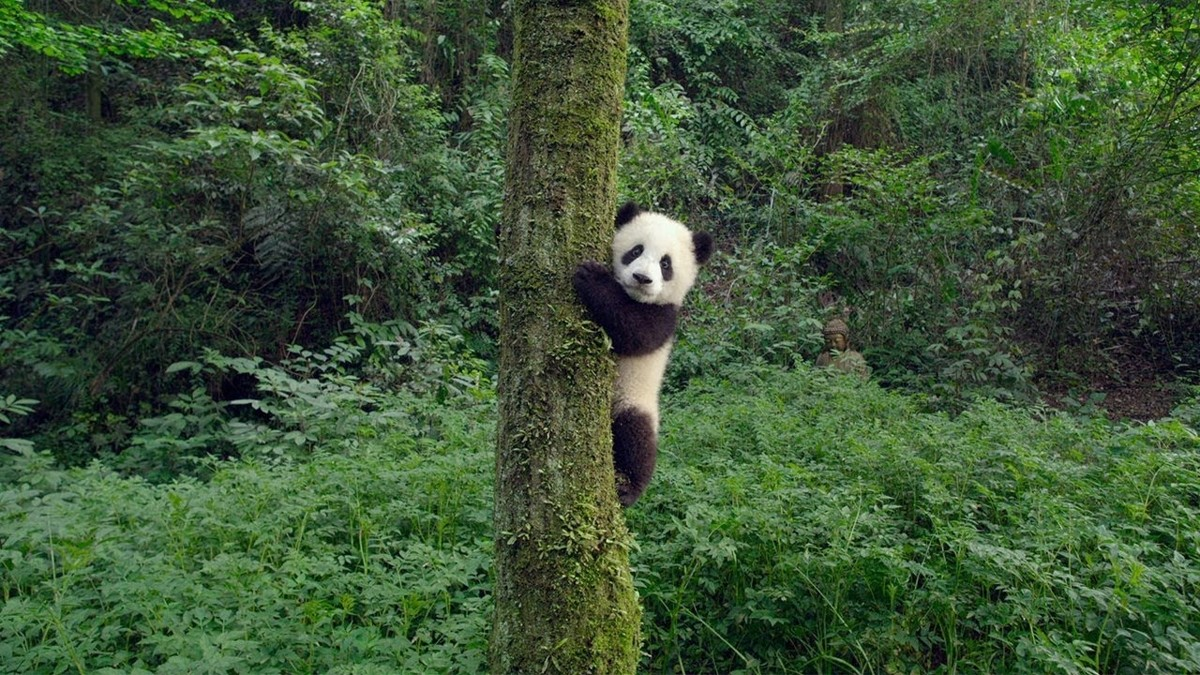Free movie panda teen, young topless beach girls