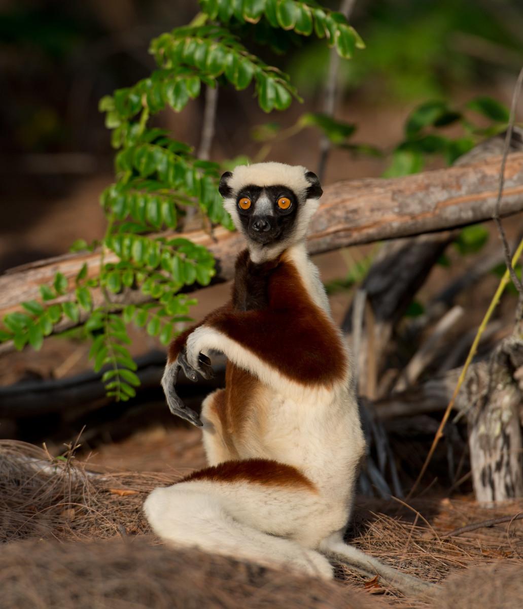 Мадагаскар животные фото
