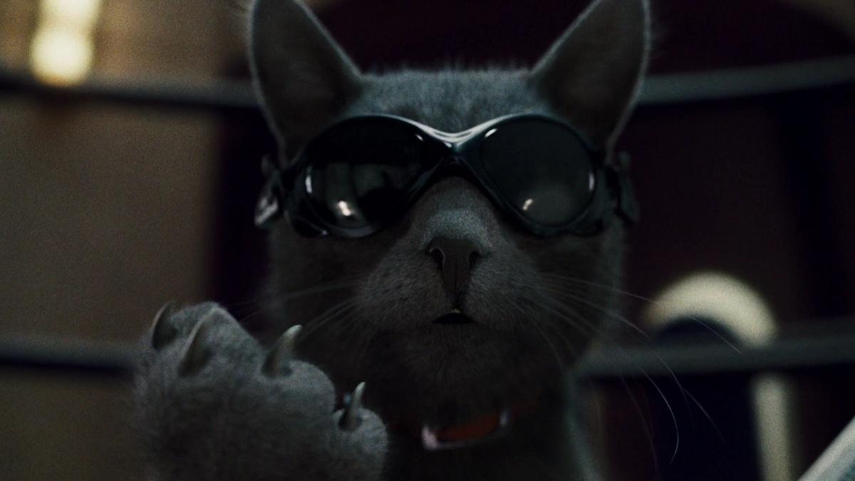 национальной кот спецагент картинки трикотаж обеспечивает идеальную